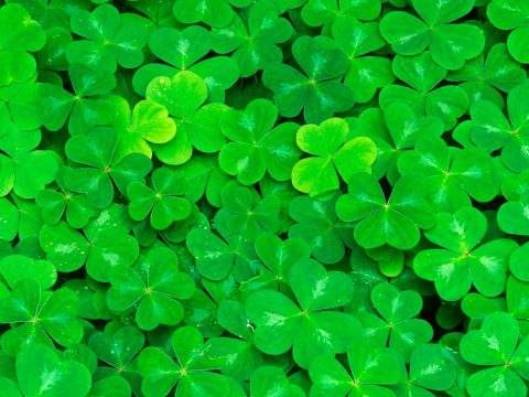 6869861-clover-wallpaper