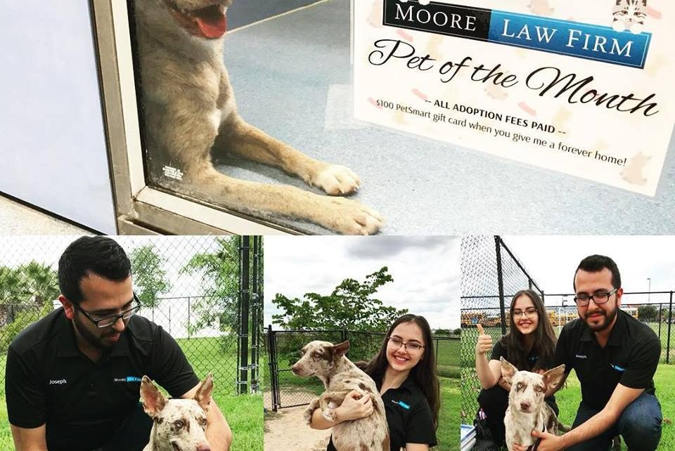 Moore Law Firm Pet of the month